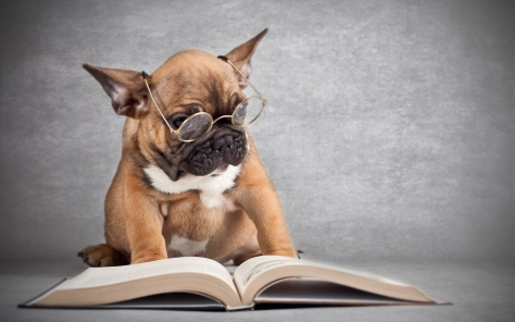 dog_reading_bio_book-wide