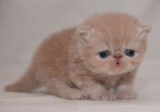 cute-sad-kitten04